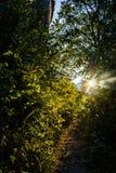 Światło słoneczne raca z liśćmi i krzakami Obrazy Stock