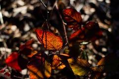 Światło słoneczne w Czarnym lesie Zdjęcia Royalty Free