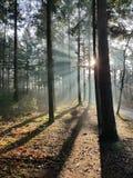 Światło słoneczne w drewnie Zdjęcie Royalty Free