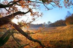Światło słoneczne w jesień dębu gałąź Zdjęcie Stock