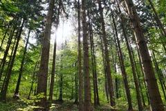 Światło słoneczne w lesie na sposobie Bucina widok przy początkiem jesień w zachodniej cyganerii Zdjęcie Stock
