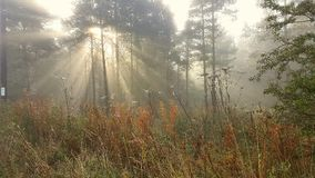 Światło słoneczne w mglistym lesie Obraz Stock