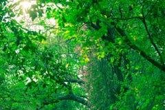 Światło słoneczne w ogródzie Obrazy Stock