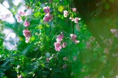 Światło słoneczne w ogródzie Obrazy Royalty Free