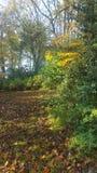 Światło słoneczne w parku fotografia stock