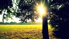 Światło słoneczne w parku Obrazy Royalty Free