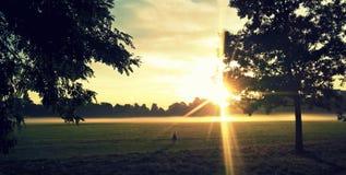 Światło słoneczne w parku Zdjęcia Stock