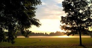 Światło słoneczne w parku Fotografia Royalty Free