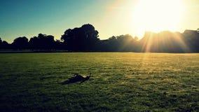 Światło słoneczne w parku Zdjęcie Stock