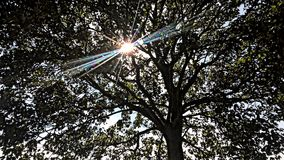 Światło słoneczne w parku Obrazy Stock