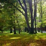 Światło słoneczne w parku z drzewami i zieloną trawą Obrazy Stock