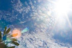 Światło słoneczne z treetop Obraz Stock