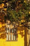 światło słoneczne zima Zdjęcie Royalty Free