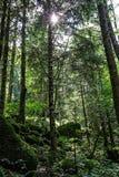 Światło w drewnie Zdjęcie Stock
