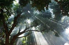 Światło w dymnym lesie Obrazy Stock