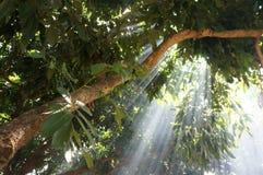 Światło w dymnym lesie Obraz Royalty Free