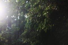 Światło w lesie Zdjęcia Stock
