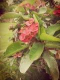 Świat liczby jeden piękni kwiaty Obraz Stock