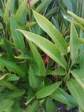 Świat rośliny Obraz Royalty Free