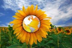 świat słonecznikowy ilustracji