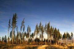 świateł słoneczne drzewa Zdjęcie Royalty Free