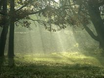 świateł słoneczne drzewa Fotografia Royalty Free