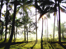 świateł słoneczne lasu Obraz Stock