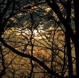 świateł słonecznych drzewa Obrazy Royalty Free
