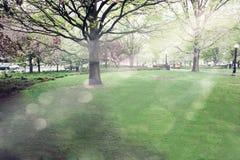 świateł słonecznych drzewa Obrazy Stock