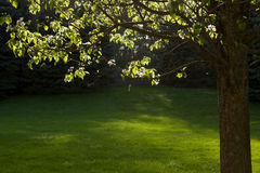 świateł słonecznych drzewa Zdjęcie Royalty Free