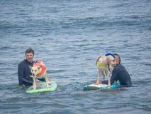 Światu surfingu Psi mistrzostwa fotografia royalty free
