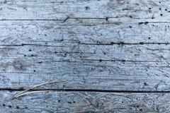 Świdrowa nora, zniszczone dziury w drewnianym tle fotografia stock