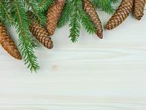 Świeża świerczyna rozgałęzia się z rożkami dla nowego roku Zdjęcie Stock