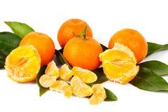 Świeża żniwo mandarynka Obraz Royalty Free
