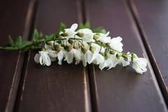 Świeża akacja kwitnie na stole zdjęcie royalty free