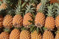 Świeża ananasowa owoc zamknięta w górę zdjęcie royalty free