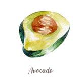 Świeża avocado ilustracja Ręka rysująca akwarela na białym tle Zdjęcie Stock