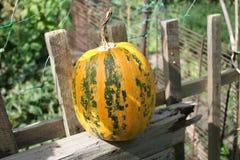 Świeża bania na ogrodzeniu zdjęcie royalty free