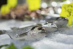 Świeża barwena przy rybim rynkiem zdjęcie royalty free