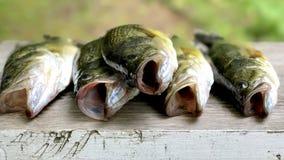 Świeża bas ryba na drewnianej tnącej desce fotografia stock