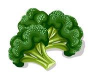 świeża brokuł green Zdjęcie Stock