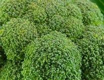 świeża brokuł zieleń fotografia royalty free
