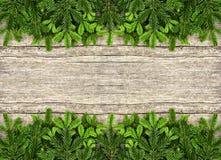 Świeża choinki gałąź nad drewnianym tłem Zdjęcia Royalty Free