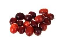 świeża cranberries garść Obrazy Stock