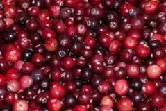 Świeża cranberry tapeta Zdjęcie Stock
