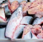 Świeża cutted ryba Obrazy Stock