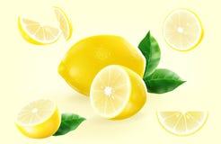 Świeża cytryna z ich liściem otaczającym cytryną w różnicie Obrazy Stock