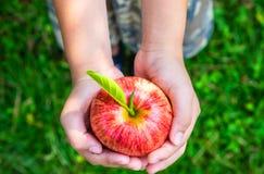 Świeża czerwona jabłczana owoc w ręce Miłości natura zdjęcie royalty free