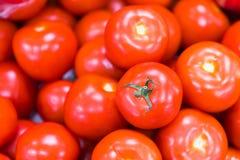 Świeża Czerwona Pomidorowa organicznie owoc zdjęcie royalty free
