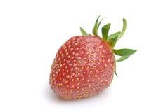 świeża czerwona truskawka Zdjęcie Royalty Free